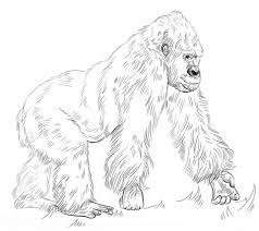 coloring page of gorilla silverback gorilla coloring page free printable coloring pages