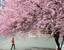 best spots for spring flowers travel portland