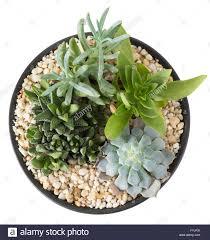 overhead view of an indoor plant garden with succulent plants in