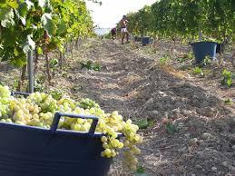 visite in cantina arezzo strada del vino