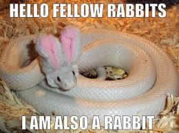 Hello Meme Funny - hello fellow rabbits i am also a rabbit funny snake meme picture
