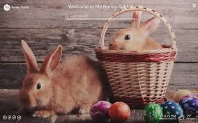 theme google chrome rabbit my bunny rabbit new tab chrome web store