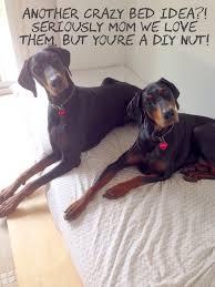 ikea hack side murphy bed dog bed u2026again littlehousesbigdogs