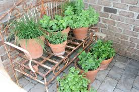 container herb garden tips for planting a container herb garden