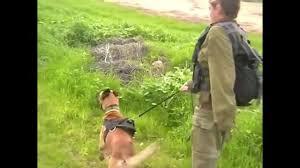 belgian shepherd us army israeli army dog soldiers military dogs idf malinois belgian