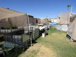 Backyard Shrimp Farming by Fish In The Desert Arizona Farmer Nets Sustainable Commercial