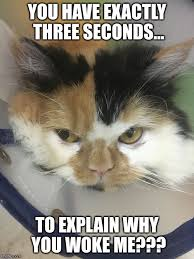 Angry Cat Meme - image tagged in angry cat imgflip
