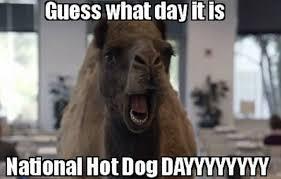 Hot Dog Meme - national hotdog day 2017 memes best jokes photos gifs