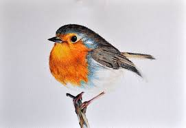robin bird drawing