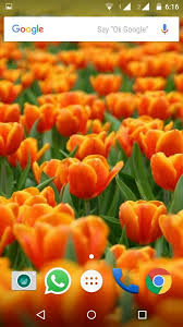 tulips flowers tulips flowers wallpapers hd android apps on play