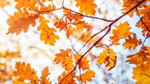 ten autumn poems