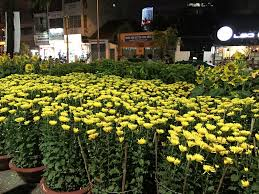 flowers and plants top flowers and plants at tet festival scooter saigon tour