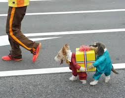 Chihuahua Halloween Costumes 30 Awesome Dog Cat Halloween Costumes Slideshow Cattime