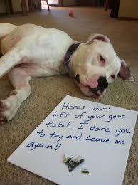 Dog Shaming Meme - post your favorite dog shaming meme