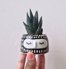 cute plant plant pot