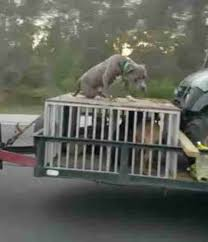 Truck Bed Dog Kennel Dog Spotted Chained To Back Of Truck U2014 And It U0027s Totally Legal