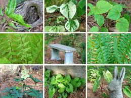 native woodland plants deb u0027s garden deb u0027s garden blog