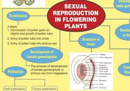Reproduction In Flowering Plants - buy sexual reproduction in flowering plant study material biology