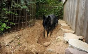 keep digging dogs from destroying your garden and yard news