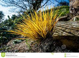 ornamental grass stock image image of display grass 69342043