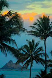 123 best palm trees images on pinterest beautiful places travel