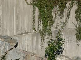free stock photo of plants climbing concrete wall 2 plants