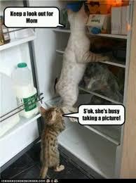 Funny Kitten Meme - funny cat and kitten picture