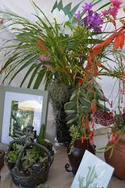succulent planters for sale inspire bohemia