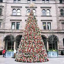 best 25 new york tree ideas on new york