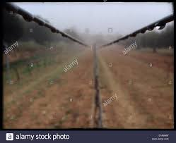 vineyard trellis wires on a foggy morning catalonia spain stock