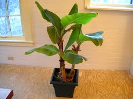 Small House Plants by Easy Houseplants To Brighten Your Winter Henry Homeyer