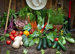 how to grow a vegetable garden home outdoor decoration