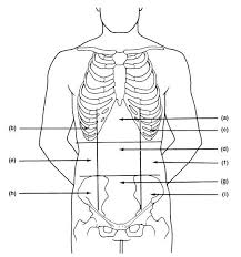 Planes And Anatomical Directions Worksheet Answers Orientation Direction Planes And The Language Of Anatomy