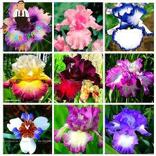 Beautiful Indoor Plants Online Buy Wholesale Beautiful Indoor Plants From China Beautiful