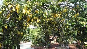 hesperidarium the citrus garden the botanical garden
