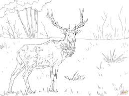 roosevelt elk coloring page free printable coloring pages