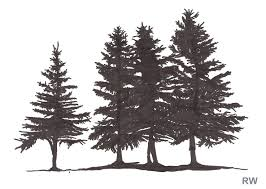 colorado blue spruce by jim hubbard clip library