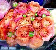 Ranunculus Flower Peach Shades Ranunculus Flowers And Fillers Flowers By