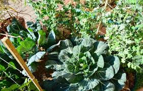 roots u0027n u0027 shoots sustainable productive and economical vegetable