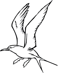 origami gabbiano disegno di gabbiano sbatte le ali da colorare disegni da