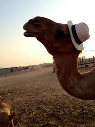 Camel Meme - joe camel meme generator