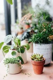 100 office plants that don t need sunlight houseplant