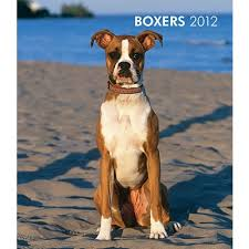 boxer dog door knocker 258 best boxers my all time favorite images on pinterest