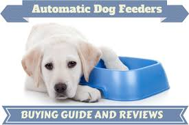 best automatic dog feeder reviews top picks for 2017