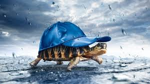 turtle carrying a hat in wallpaper 1920x1080 full hd