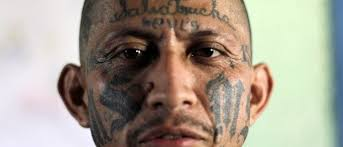 a look at the meaning behind ms 13 u0027s tat the daily caller