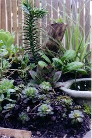 miniature the mini garden guru from twogreenthumbs com page 11
