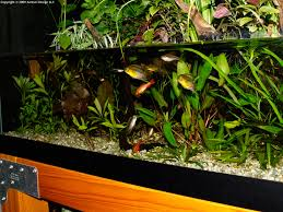 aquascape of the month december 2009
