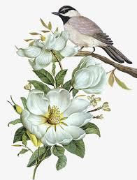 Flower And Bird - bird png vectors psd and icons for free pngtree