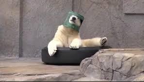Meme Bucket - psbattle polar bear wearing a chewed through bucket on head